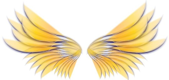 Yellow-Angel-Wings-800-800x380