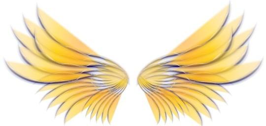 Yellow-Angel-Wings-800-800x380